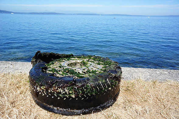 old tire by the sea