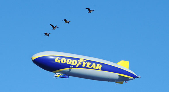 Goodyear blimp and Canadian geese