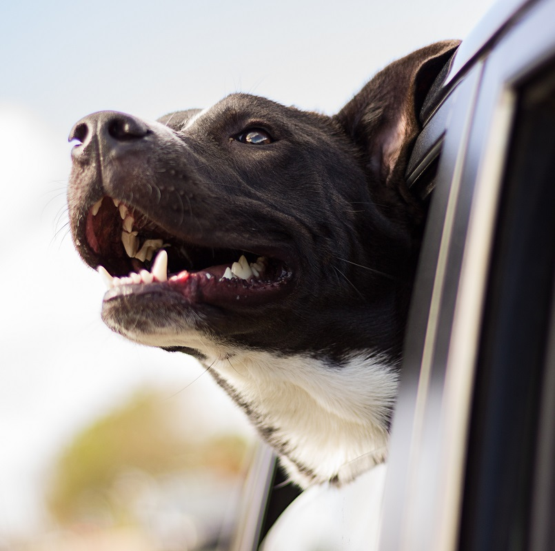 Keeping Your Furry Friends Safe on the Road